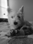 Lina's dog, Goofy