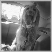 Sabrina's dog, Arie